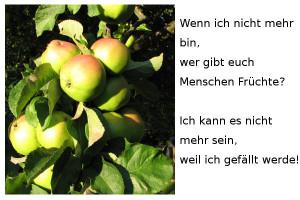 Baeume-Frucht