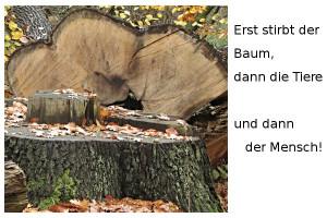 Baeume-erst
