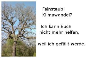 Baum-Feinstaub
