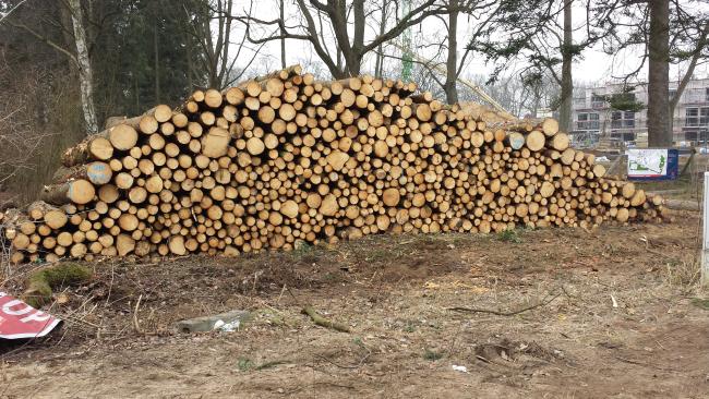 Februar 2015 Gefällte Bäume für ein Waldquartier