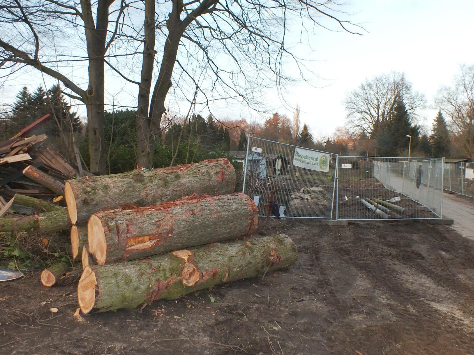Februar 2016 Pergolenviertel gefällter Baum Laubenreste