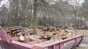 Februar 2016 Waldquartier weitere Fällungen